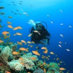 CL-southern-caribbean-diving-spots