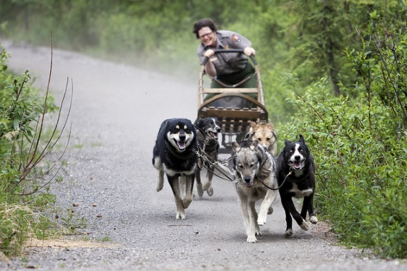 Dogs Pulling Sled Name