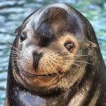 Photo Courtesy of Aquarium of the Pacific & Robin Riggs