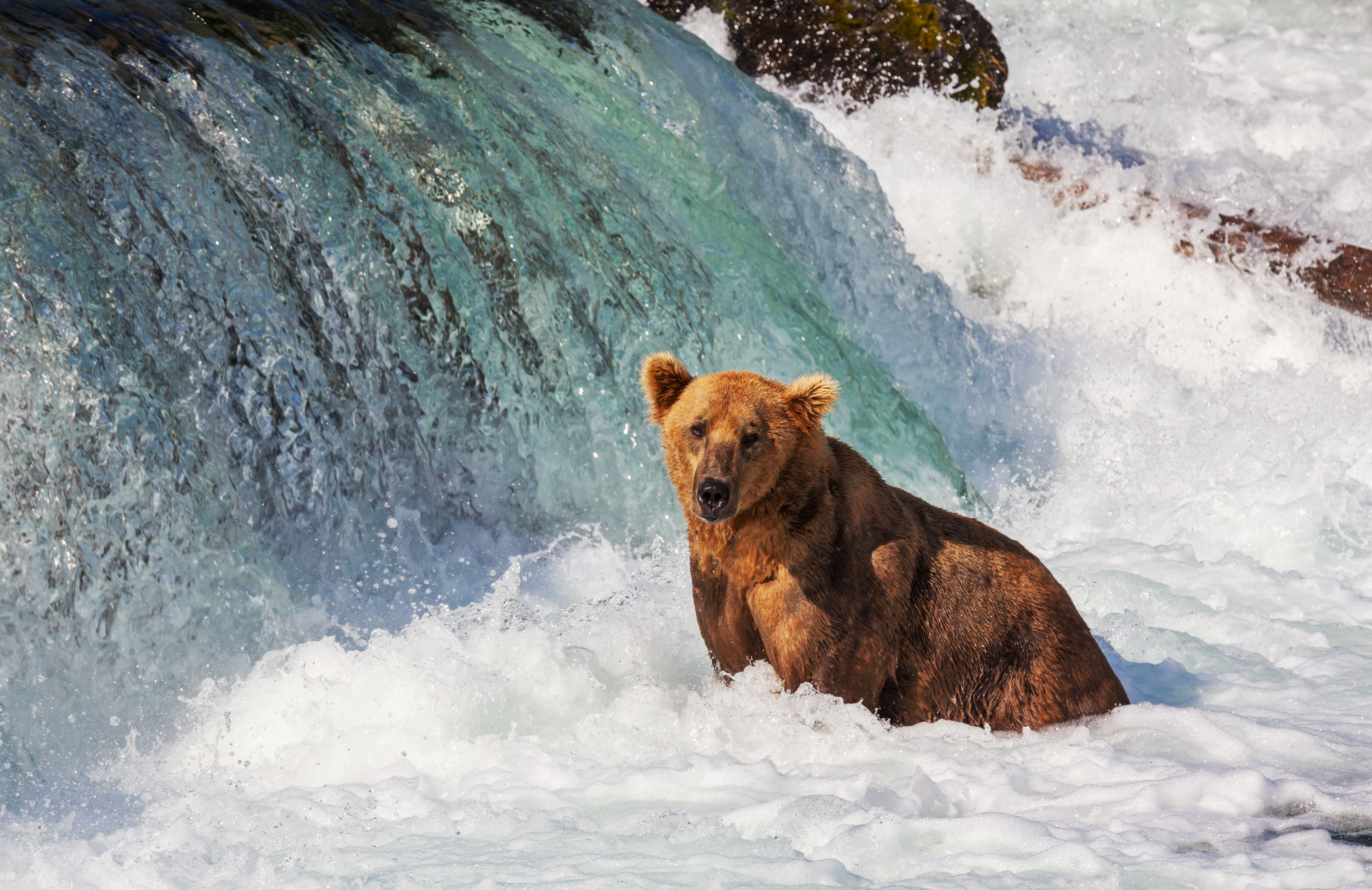 Nature Lovers Enjoy The Artic Wilderness On A Cruise To Alaska