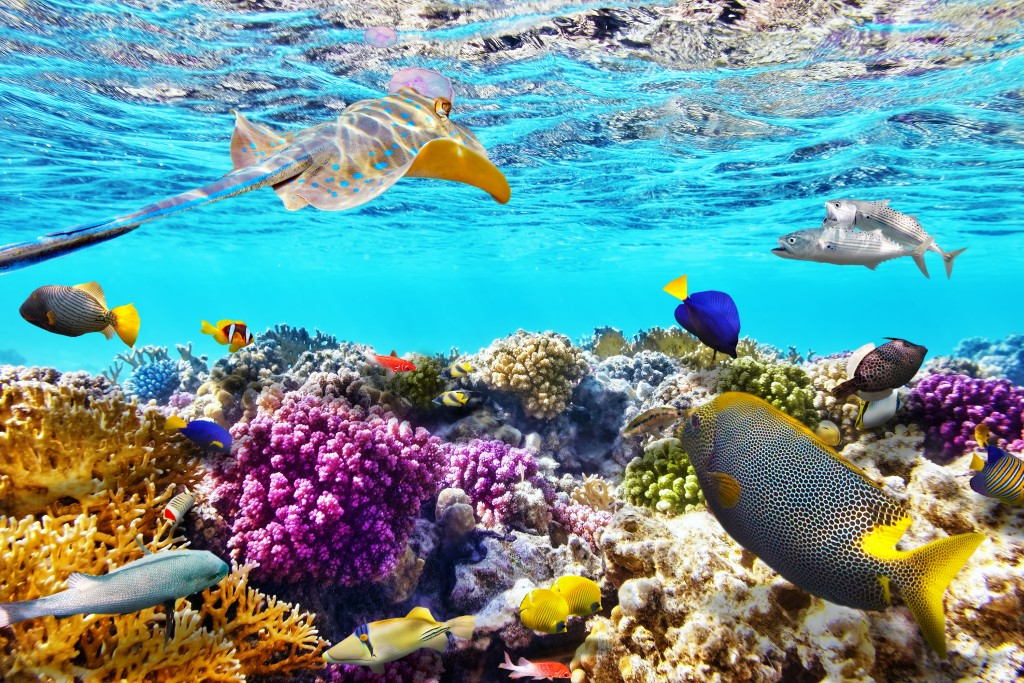 Cruise The Great Barrier Reef