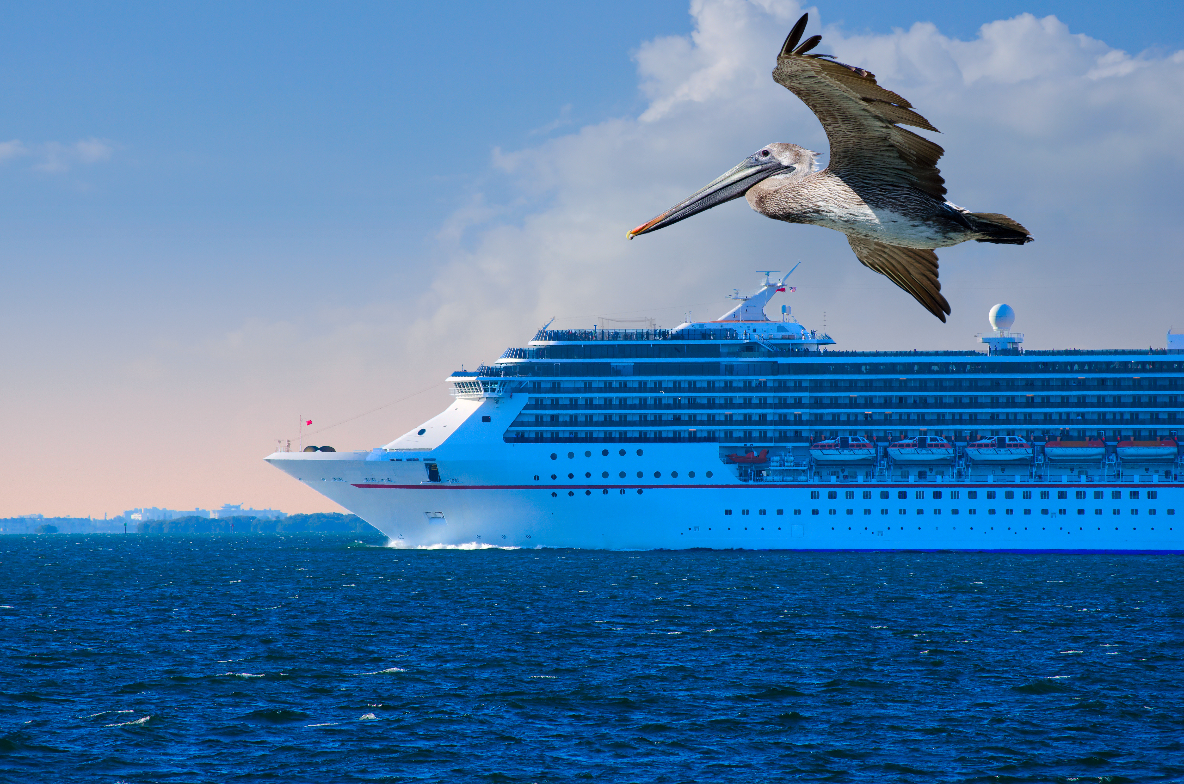 What Sea Creatures Can You See On A Cruise?