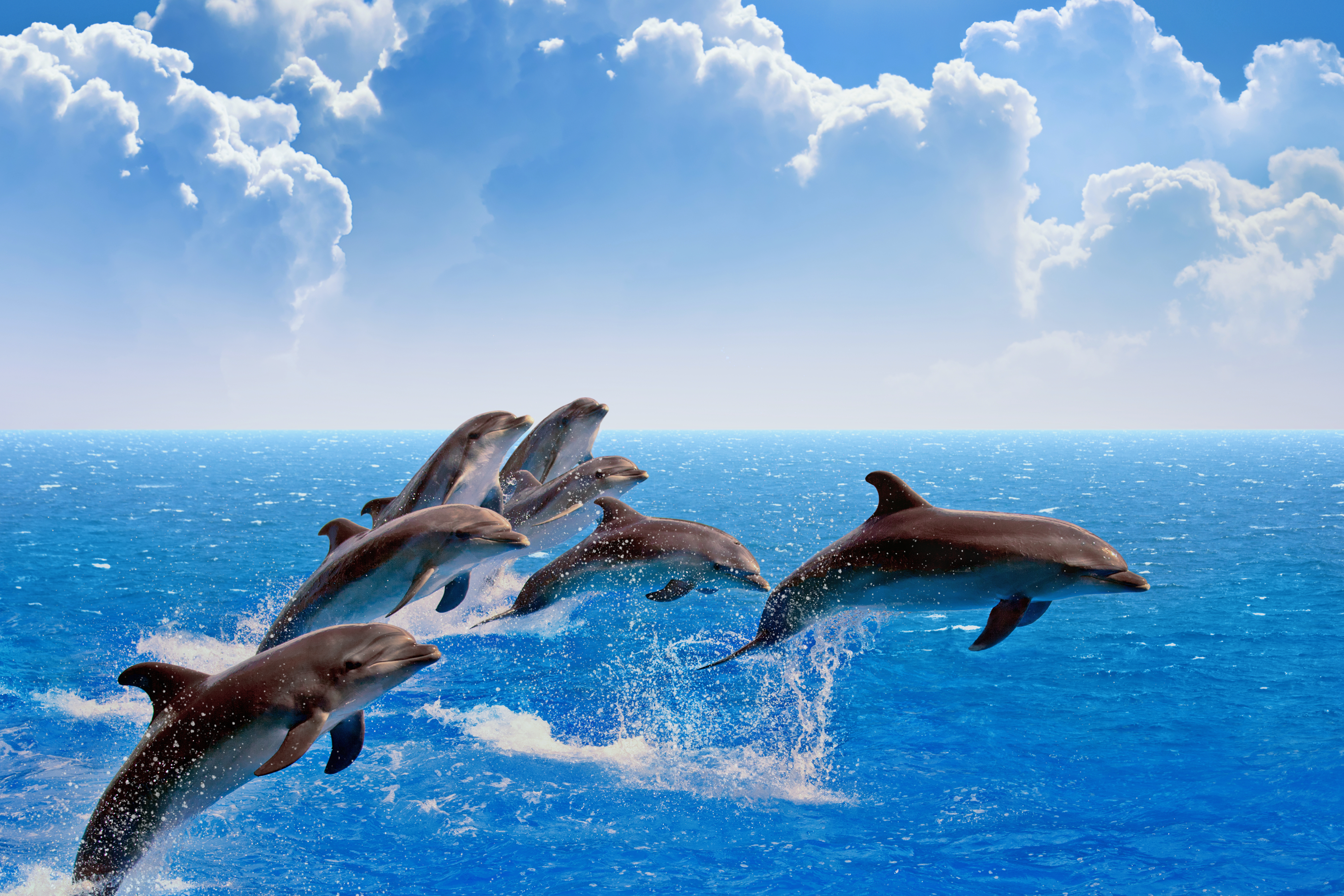 What sea creatures can you see on a cruise for Dolphin fish pictures