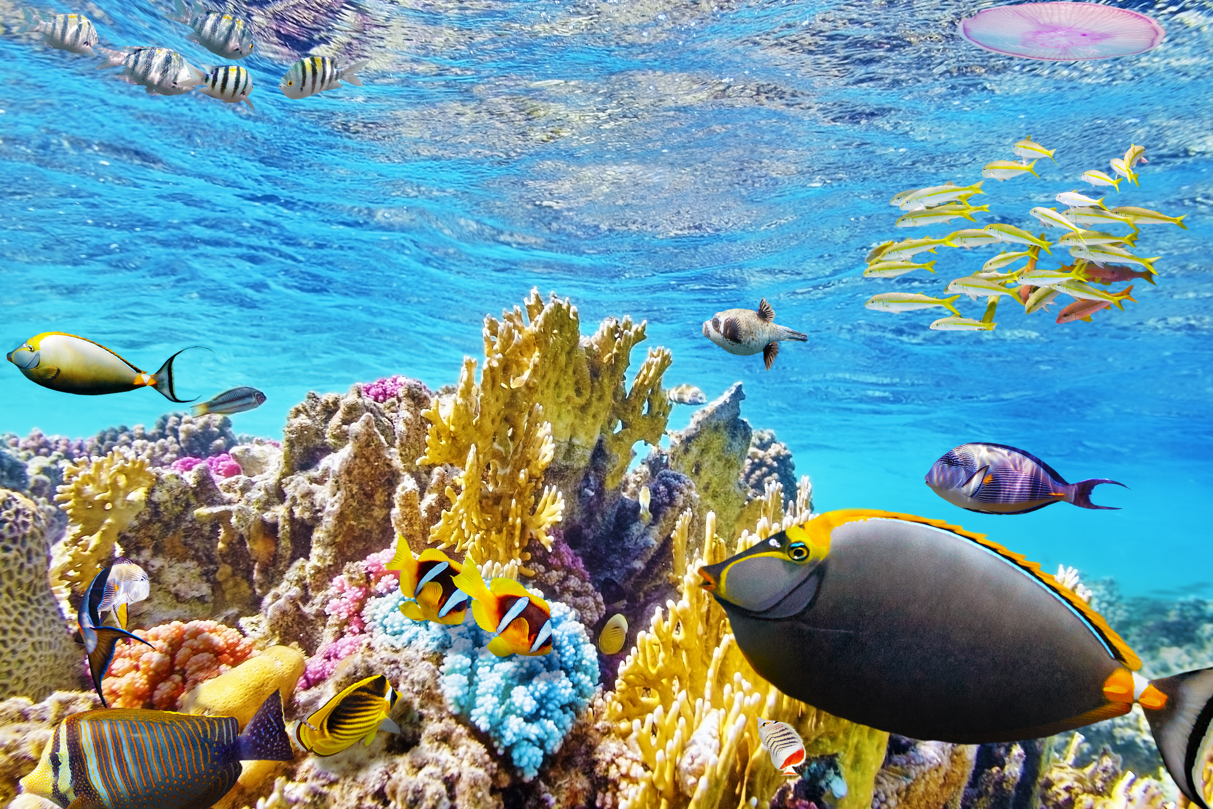great barrier reef Great barrier reef hotel deals: find great deals from hundreds of websites, and book the right hotel using tripadvisor's 701,088 reviews of great barrier reef hotels.