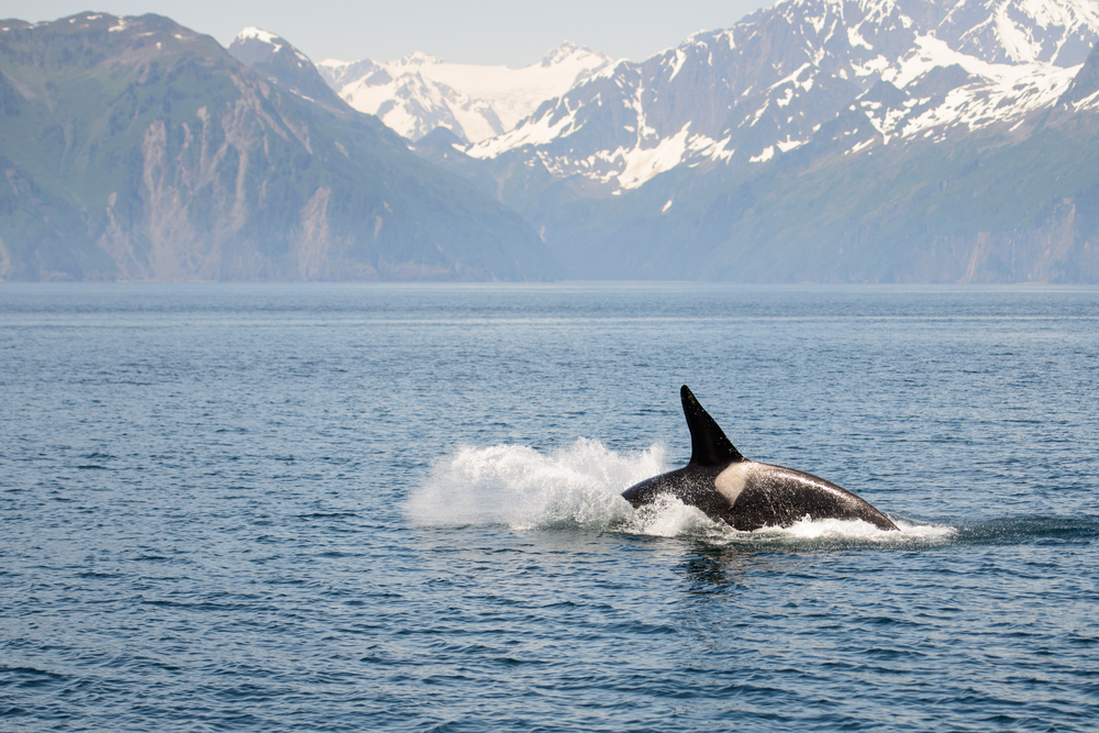 Alaska Cruise Deals On Princess - Cruise deal