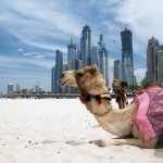 Enjoy luxury on your Cruise to Dubai