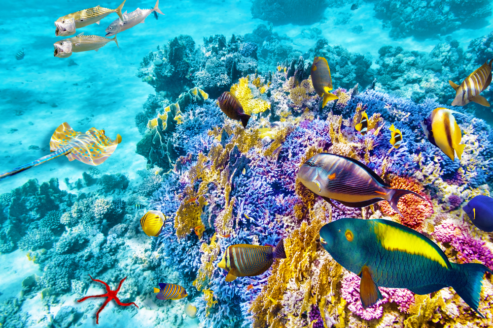 Great Barrier Reef Cruises Go Before Its Too Late
