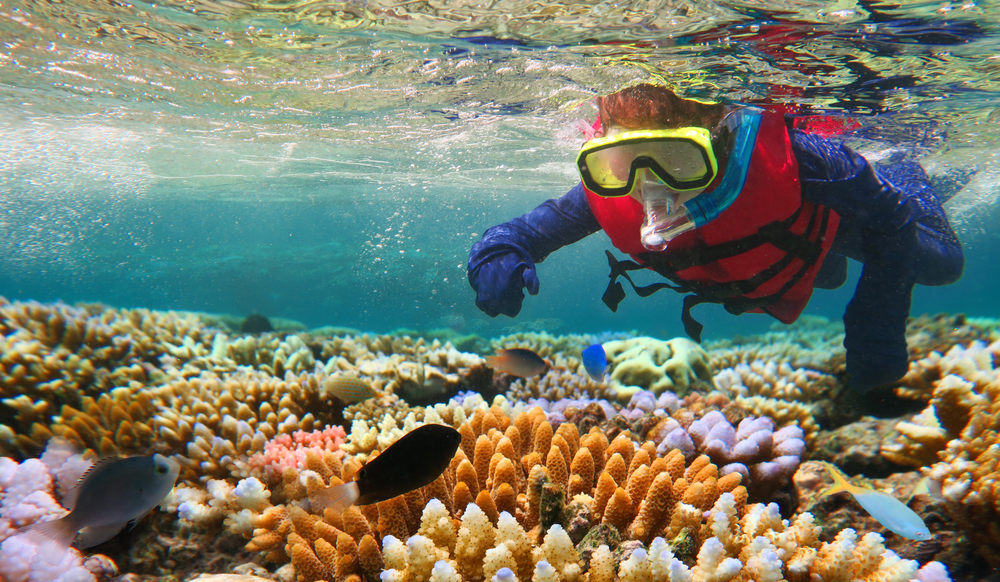 Great Barrier Reef Snorkeling