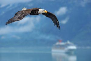 alaskan cruise tours 2017