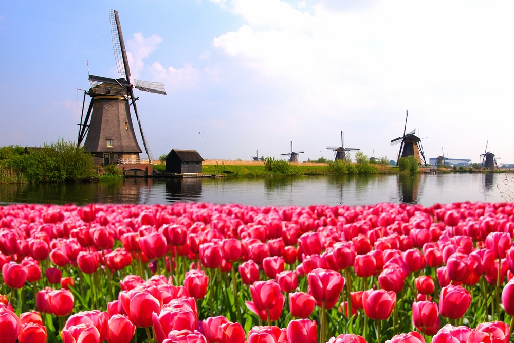 Best Niederlande