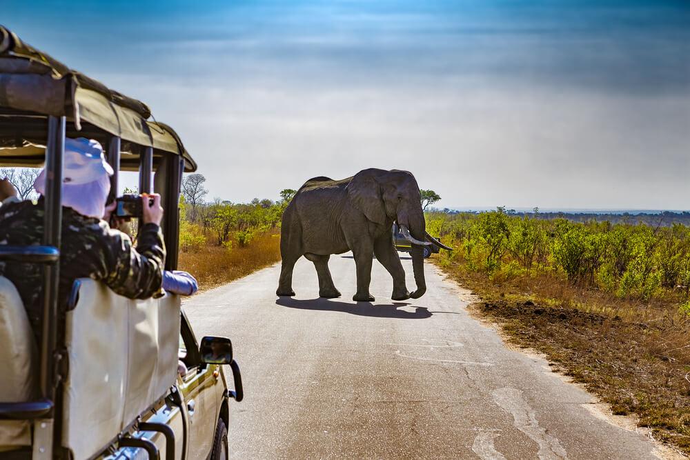 africa cruises with safari