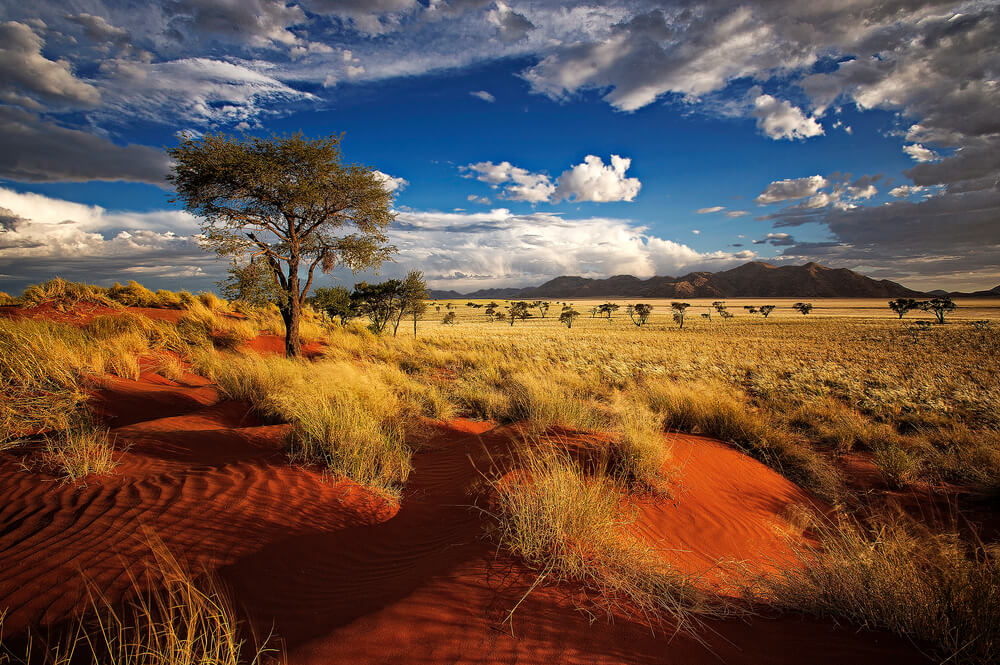 cruise to south africa