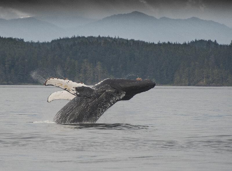 alaska cruise excursions
