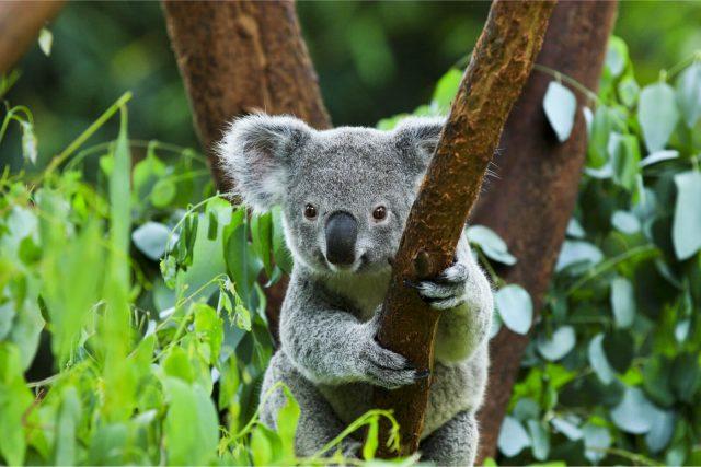 Australian Wildlife Cruise