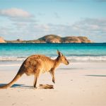 cruise to australia for wildlife