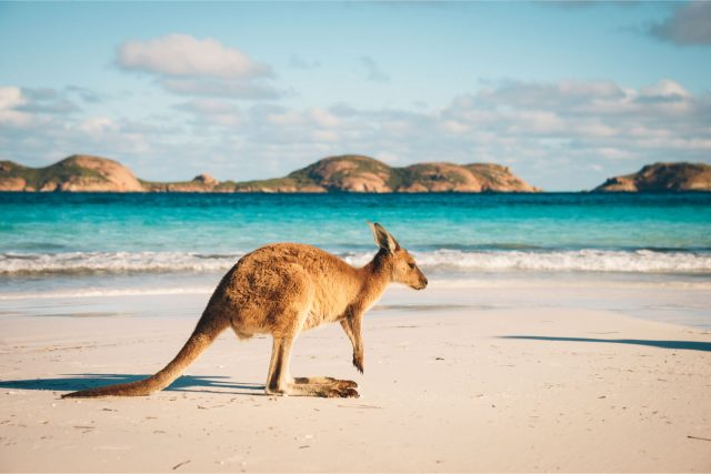 cruise to australia for wildlife